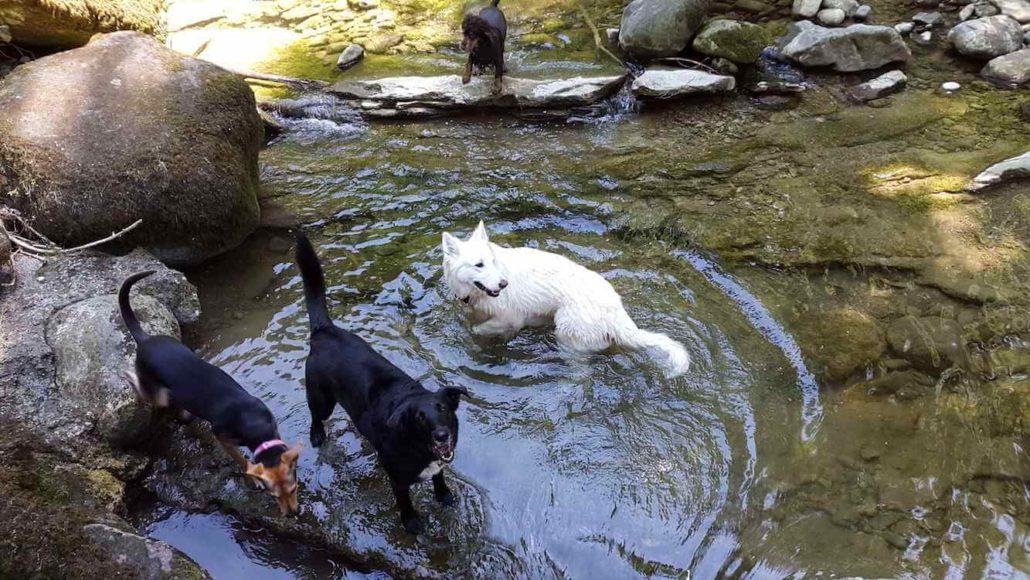 Claudias Animalcare Ihr Tier In Vertrauter Hand Am Mittleren